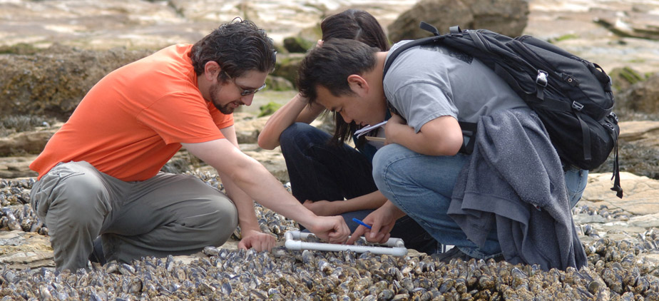 Students examining sea shells by the beach